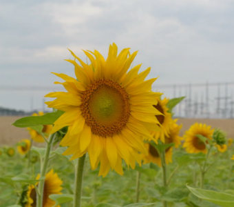 Rivne-Kyiv-flower.jpg