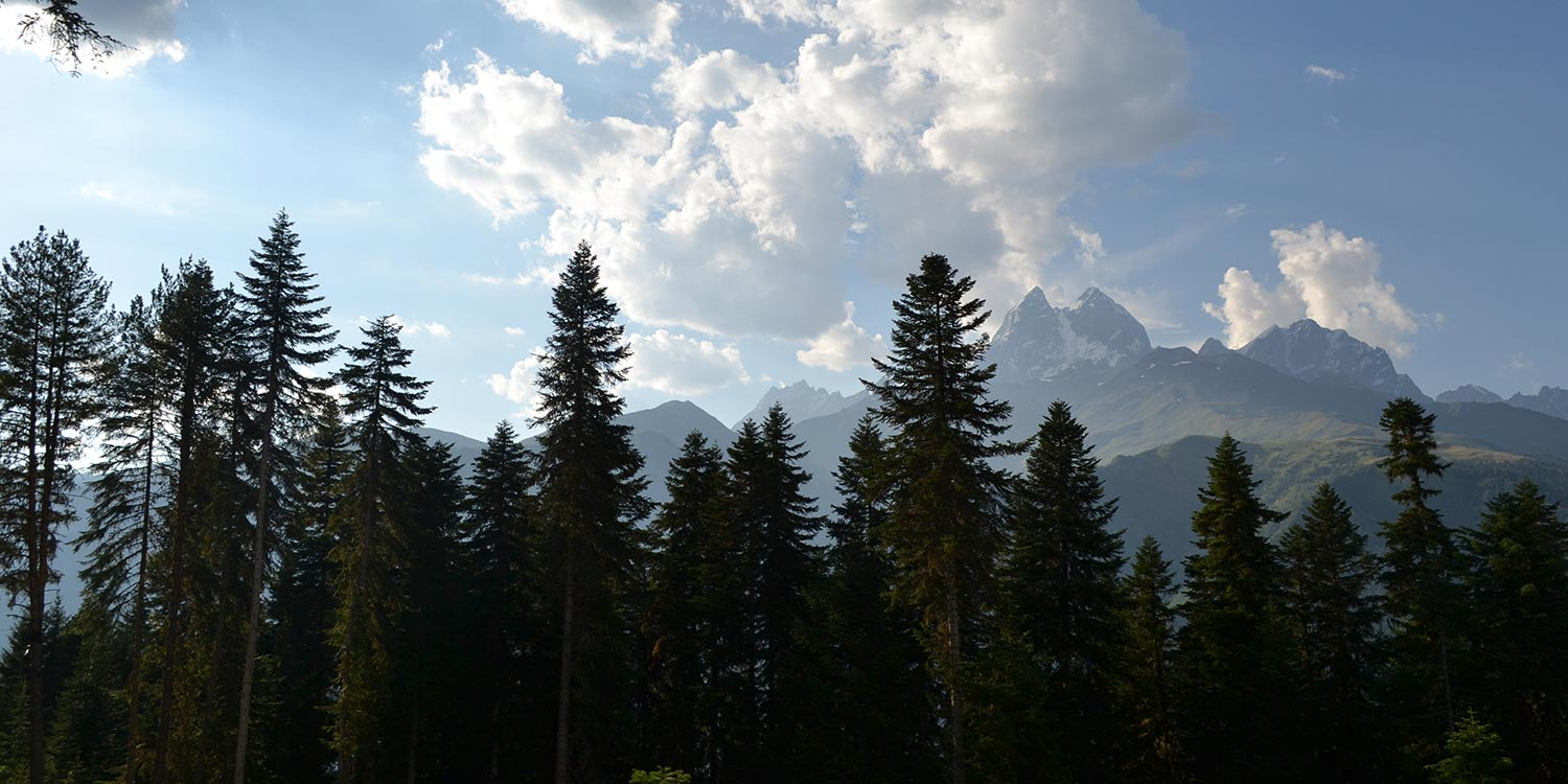 Large trees in front of an imposing mountain range and blue sky.