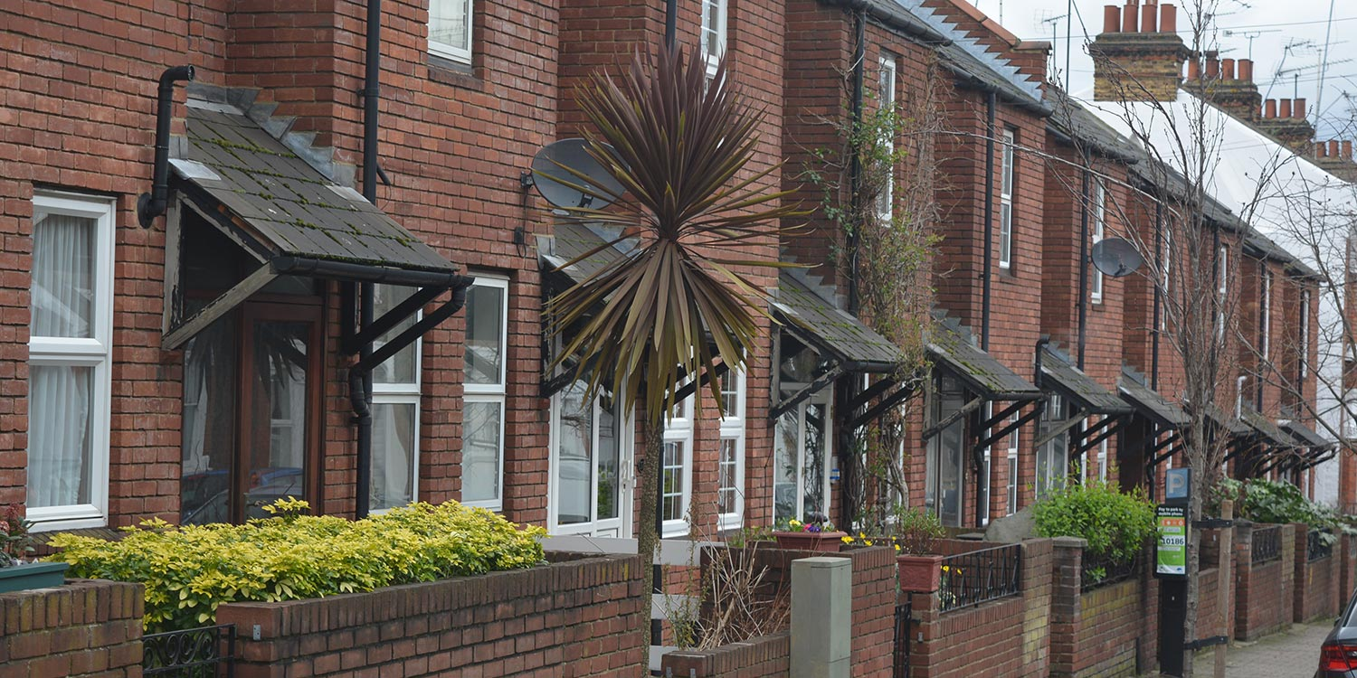A street in London. A dry palm tree stands in front of one of the houses.