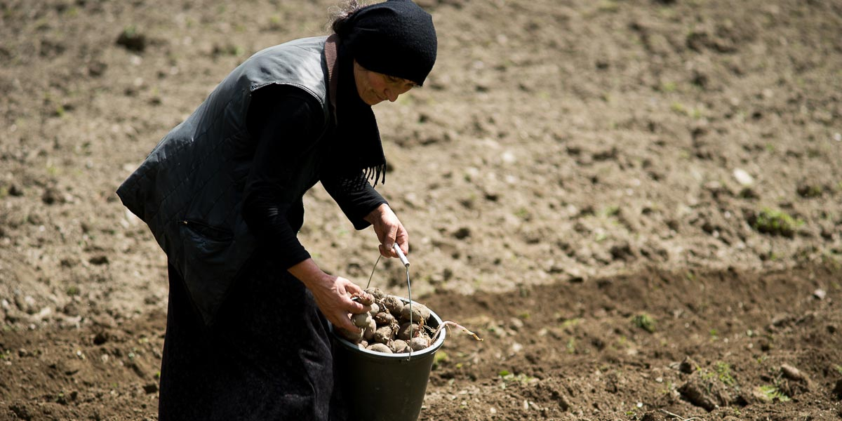 A woman leaning forward while tilling a field.