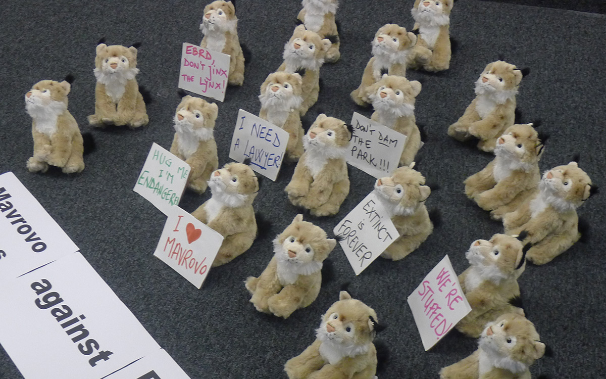 "A group of stuffed lynx toys ""staging a protest""."