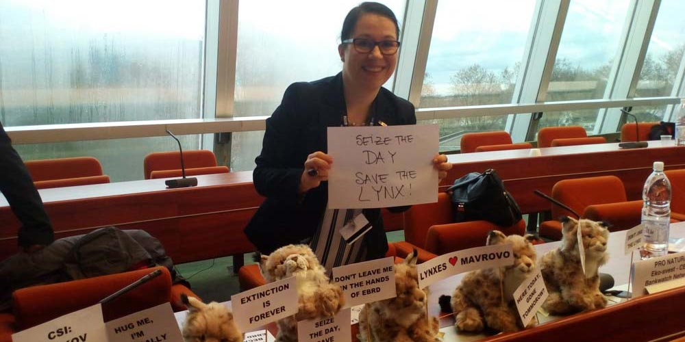 "A woman in a meeting room holding a paper that reads ""Seize the day, save the lynx"". In front are stuffed lynx with more placards."
