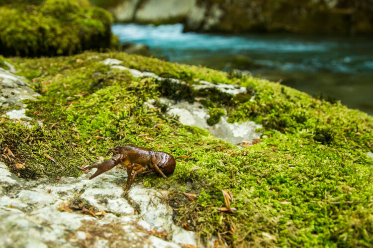 Neretva River   Photo credit: Amel Emric